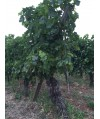 Vin Blanc Bordeaux Château Fourreau Blanc 75cl
