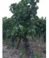Vin Blanc Moelleux Bordeaux Château Fourreau 75cl