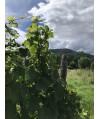 Vin d'Alsace Rouge d'Ottrott Cuvée Stéphane- Maison Vonville 75cl