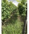 Vin d'Alsace Rouge d'Ottrott - Domaine Vonville 75cl