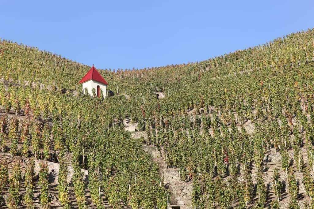 les vignes près de condrieu